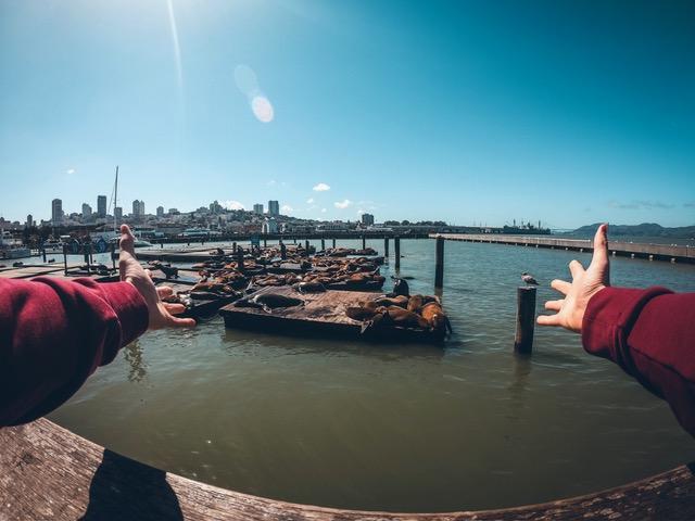 Phoque dans le port