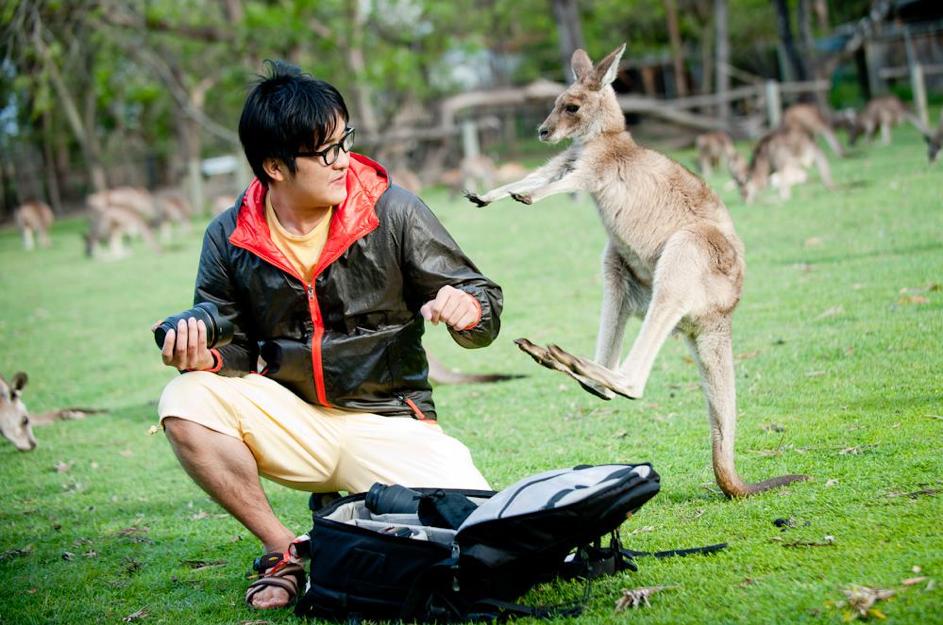 Attaque de kangourou