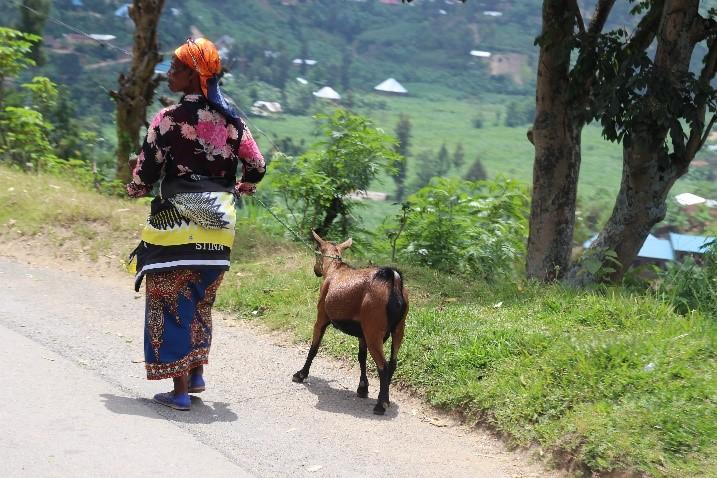 Femme promenant sa chèvre