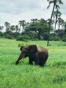 Parc national de Tarangire en Tanzanie