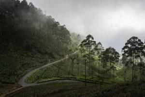 Plantations de thé du Lipton's Seat au Sri Lanka