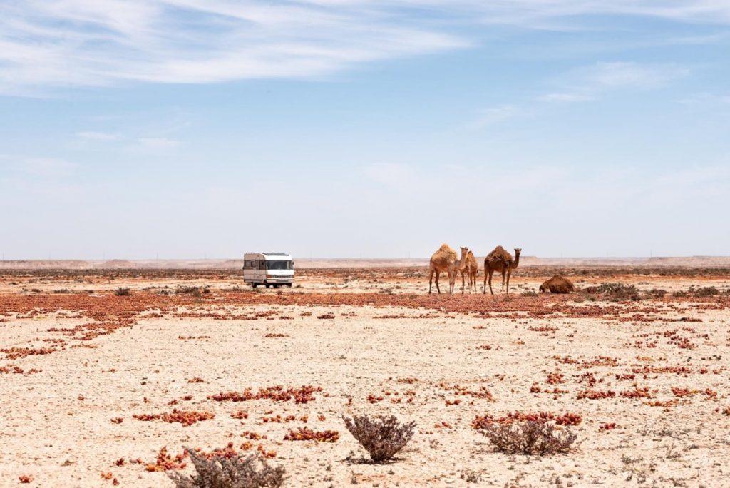 Voyager en van au Maroc