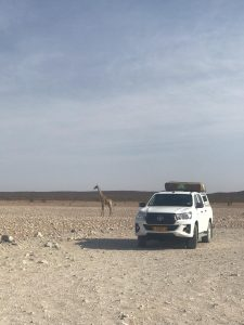 Le 4x4 près d'une girafe