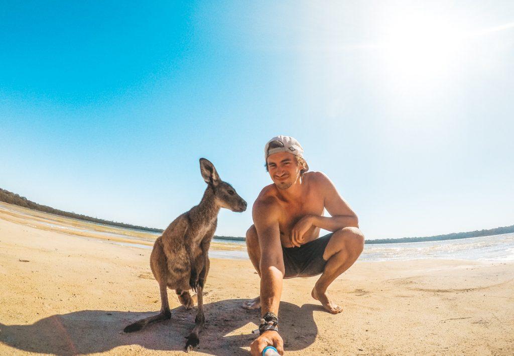 Mission HelpX avec des kangourous