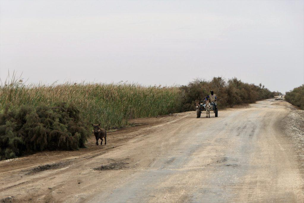 Les animaux sauvages sur le bord de la route