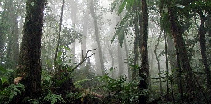 Au cœur de la forêt des parcs nationaux du Costa Rica