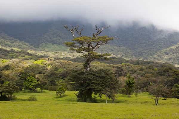 Vue des arbres dans l'un des parcs nationaux du Costa Rica