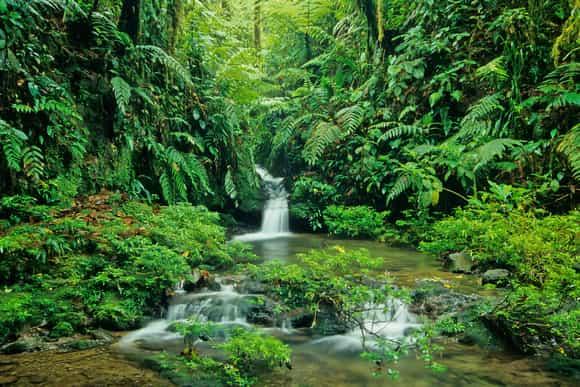 Rivière dans la forêt dans un parc national du Costa Rica
